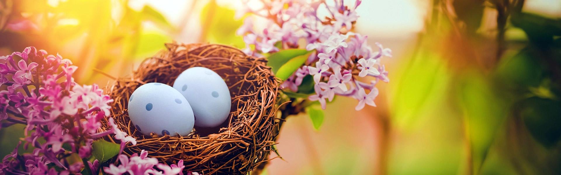 Foto di Immagini Buona Pasqua