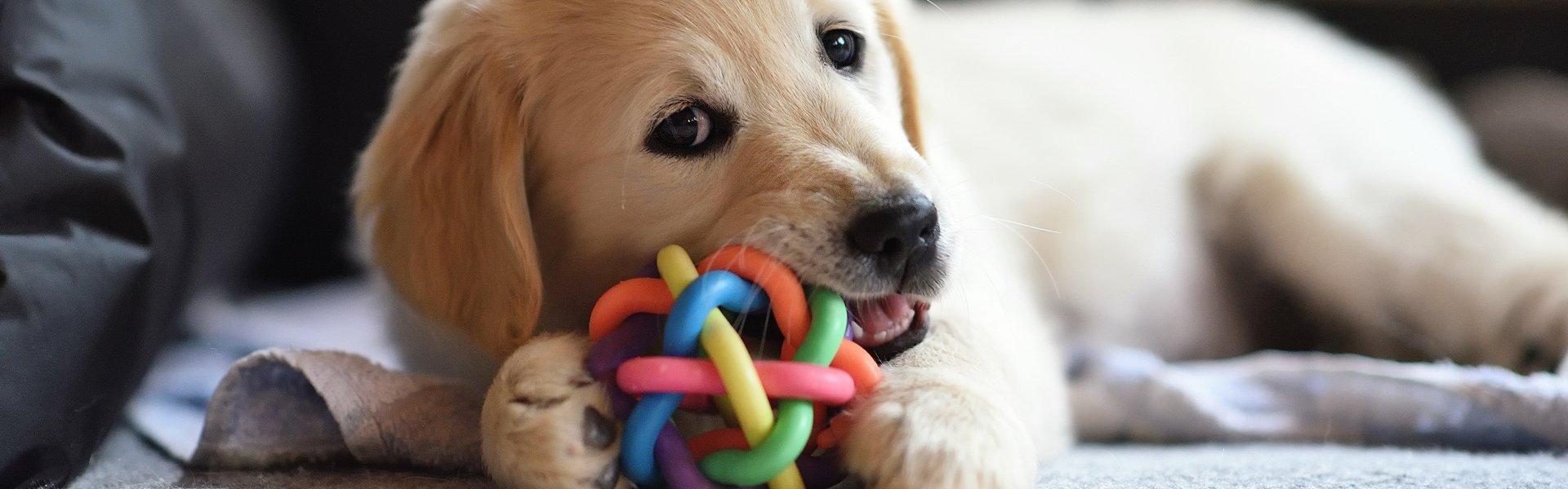 Come creare un concorso fotografico per cuccioli